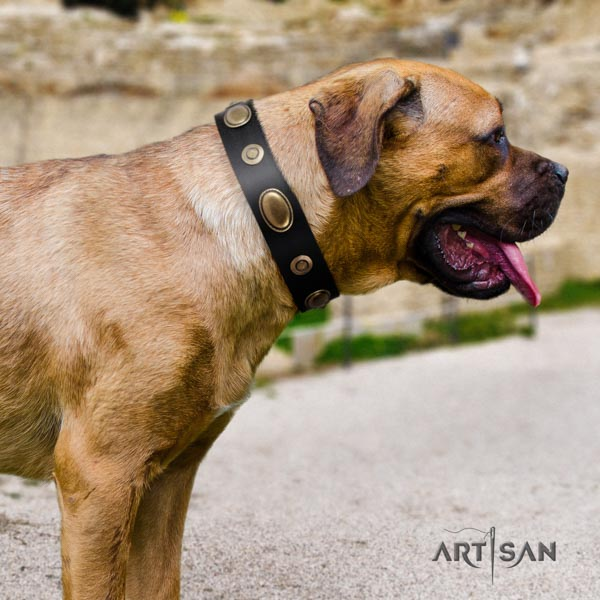 Cane Corso adorned collar made of soft genuine leather