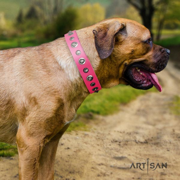 Cane Corso embellished collar made of reliable natural genuine leather