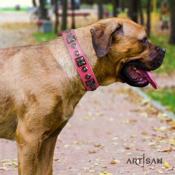 Cane Corso top rate adorned genuine leather collar