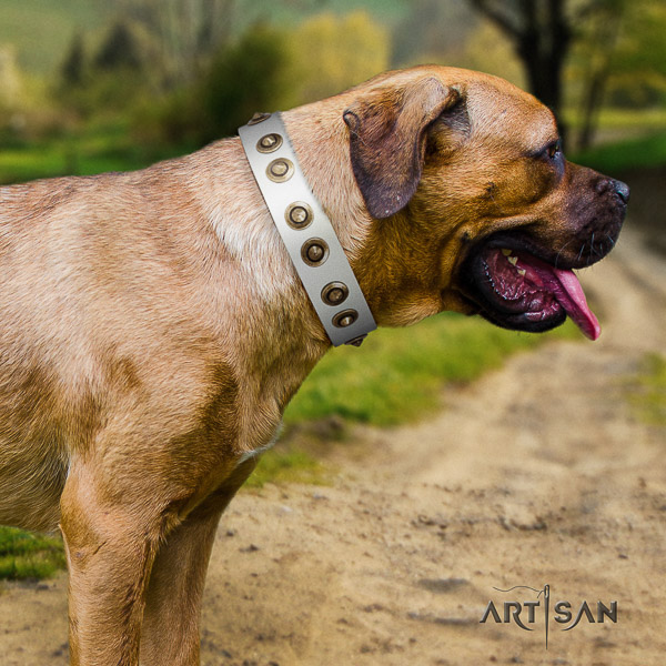 Cane Corso fashionable full grain natural leather dog collar for everyday use