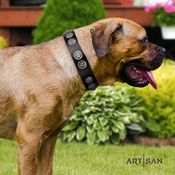 Cane Corso adjustable genuine leather dog collar for comfortable wearing