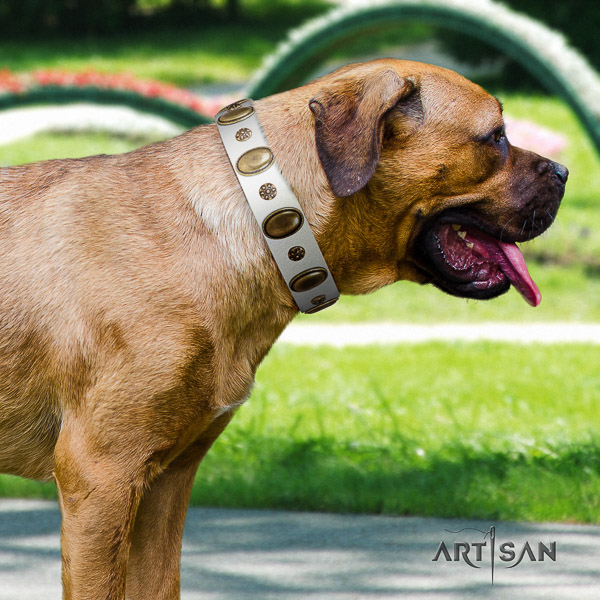 Cane Corso remarkable leather dog collar for walking