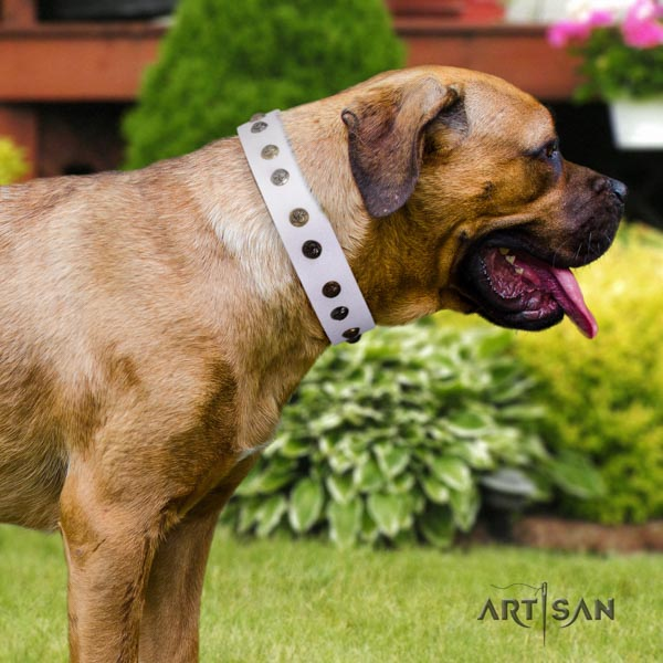 Cane Corso best quality studded full grain leather collar