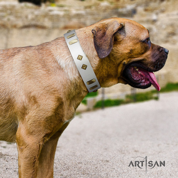 Cane Corso extraordinary leather dog collar for daily walking