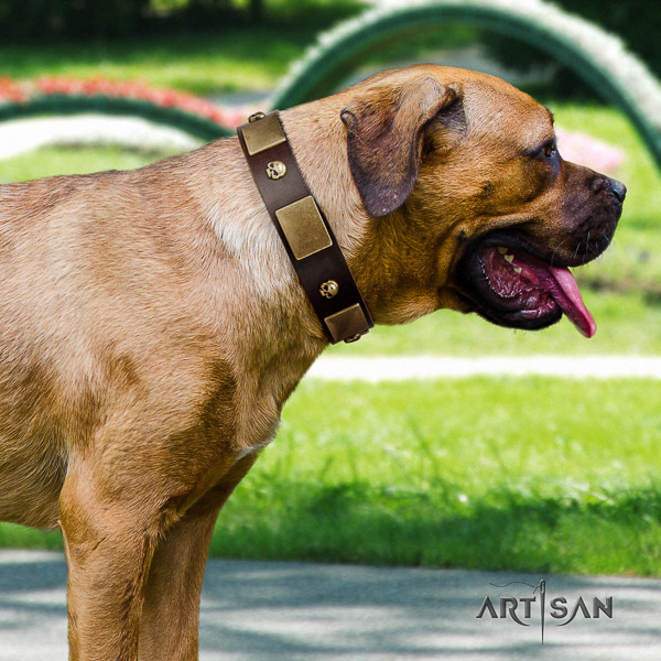 Cane Corso fine quality genuine leather dog collar for everyday use