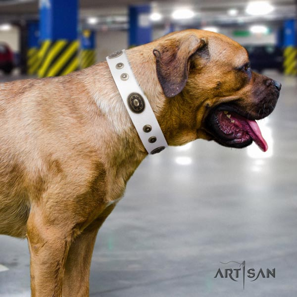 Cane Corso strong embellished full grain natural leather collar