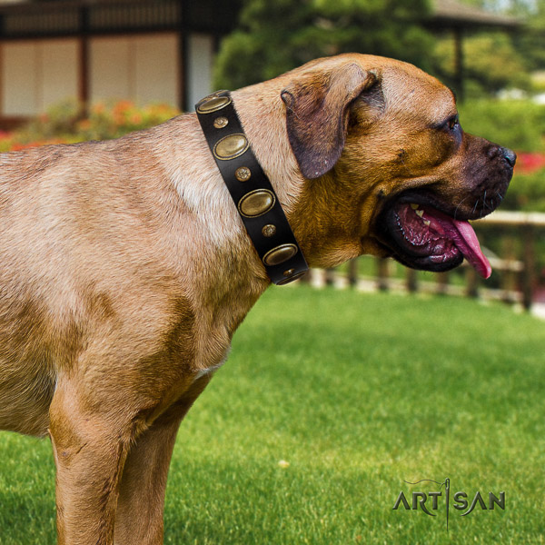 Cane Corso easy to adjust genuine leather dog collar for walking