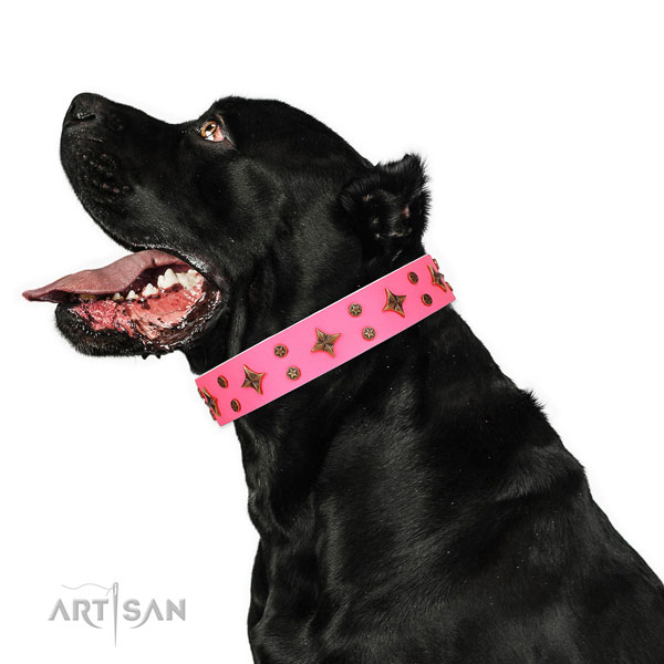 Cane Corso easy adjustable full grain leather dog collar for fancy walking