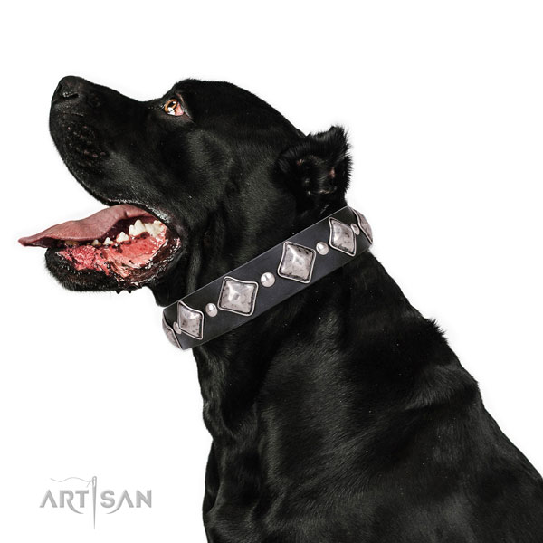 Cane Corso easy to adjust natural genuine leather dog collar for comfortable wearing