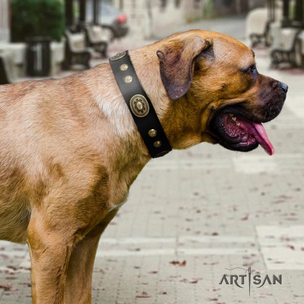 Cane Corso adorned collar made of flexible leather