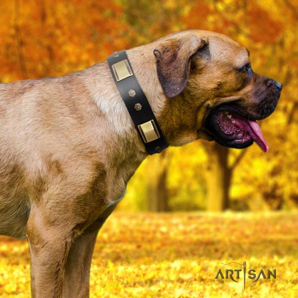 Cane Corso embellished collar made of flexible genuine leather
