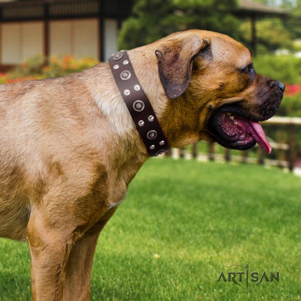 Cane Corso adorned collar made of reliable genuine leather