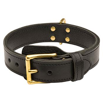 Cane Corso Dog Collar Leather with No Handle