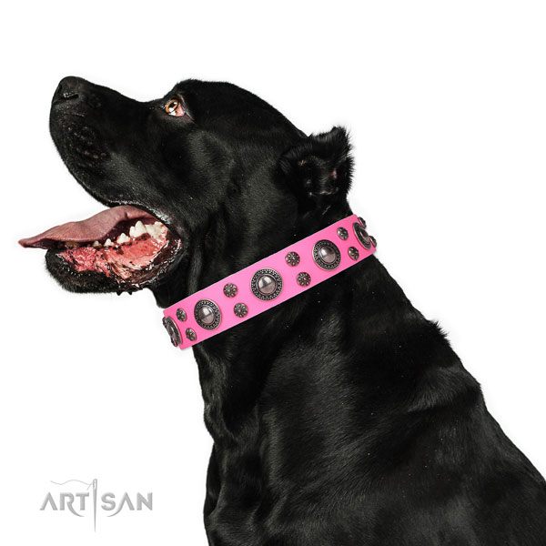 Cane Corso embellished leather dog collar for comfy wearing