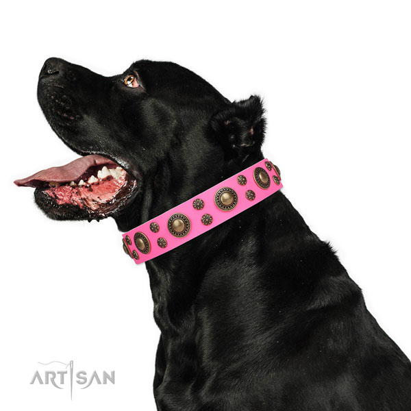 Cane Corso handmade leather dog collar for easy wearing