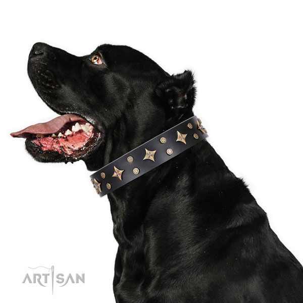 Cane Corso easy to adjust natural genuine leather dog collar for handy use