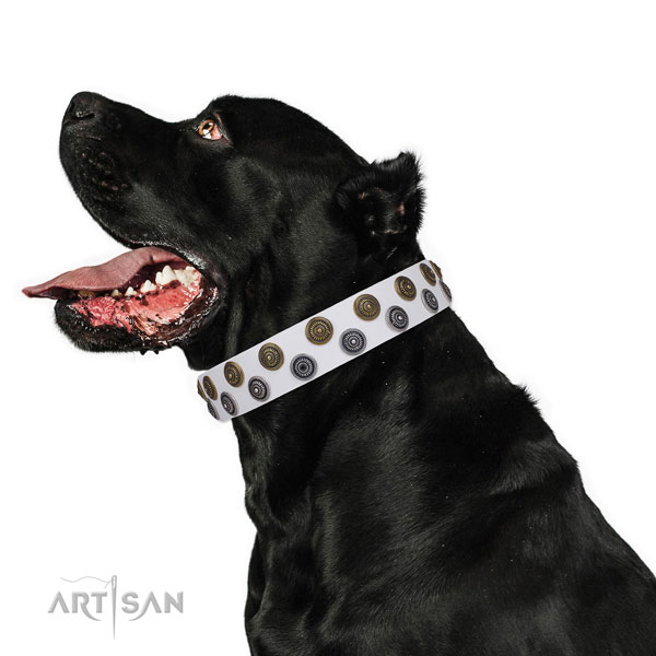 Cane Corso extraordinary full grain natural leather dog collar for basic training