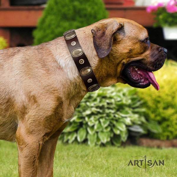 Cane Corso comfortable natural genuine leather dog collar for daily use