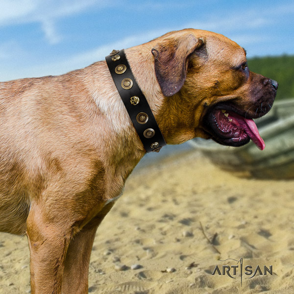 Cane Corso trendy genuine leather dog collar for handy use
