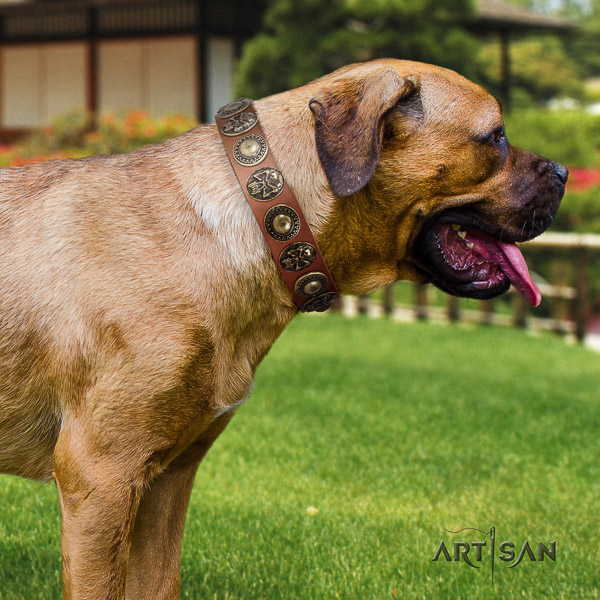 Cane Corso unique full grain leather dog collar for everyday use