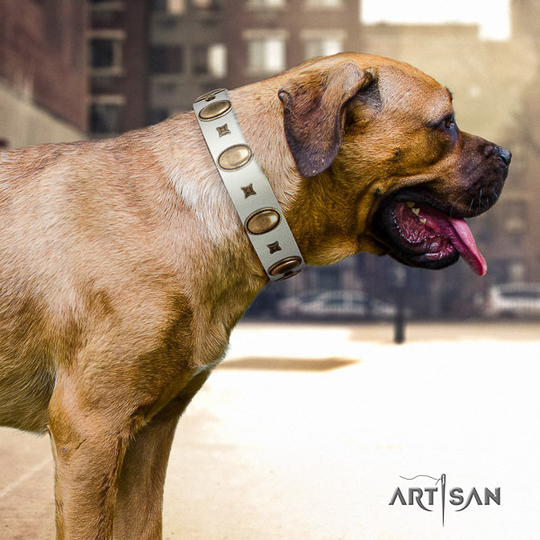 Cane Corso significant natural genuine leather dog collar for everyday use