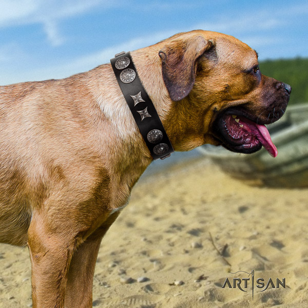 Cane Corso stunning full grain leather dog collar for basic training