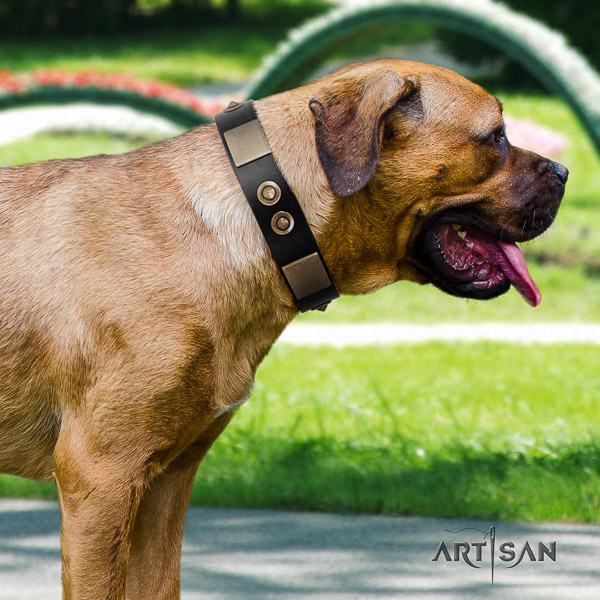 Cane Corso stylish genuine leather dog collar for easy wearing