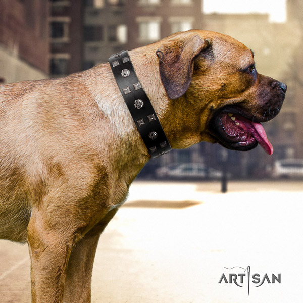 Cane Corso unique natural genuine leather dog collar for fancy walking