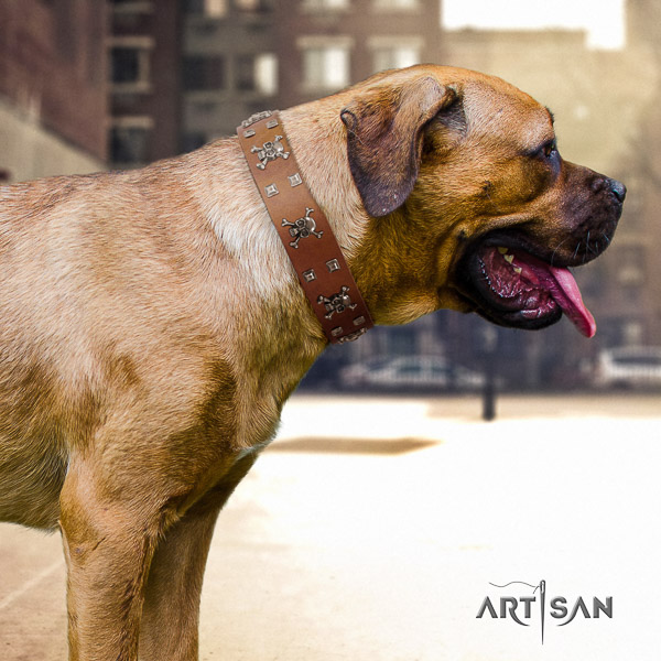 Cane Corso fashionable full grain natural leather dog collar for easy wearing