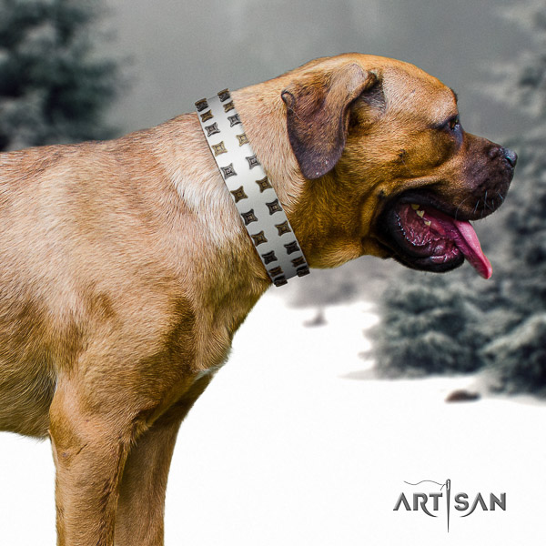 Cane Corso studded full grain genuine leather dog collar for walking