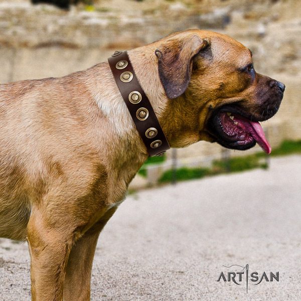 Cane Corso stunning genuine leather dog collar for everyday use