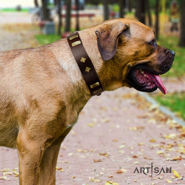 Cane Corso stylish design full grain natural leather dog collar for daily walking