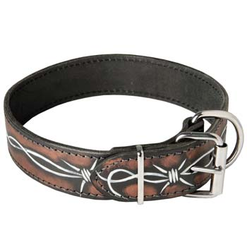 Cane Corso fashion dog collar with reliable fittings