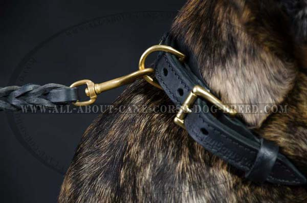 Cane Corso leather dog collar braided with brass fittings