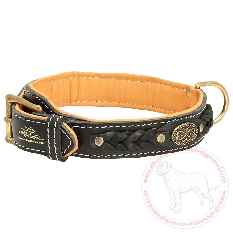 Best Dog Training Collar To Buy Proven Dog Training