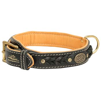 Cane Corso leather dog collar with easy-to-attach D-ring