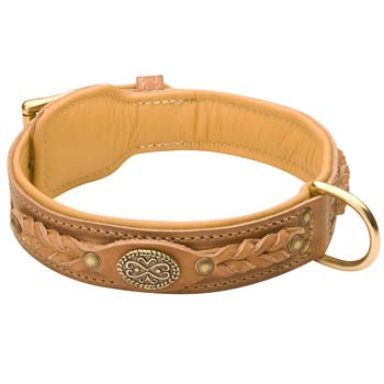 Cane Corso leather dog collar with padding brown