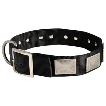 Cane Corso fashion nylon dog collar with massive plates