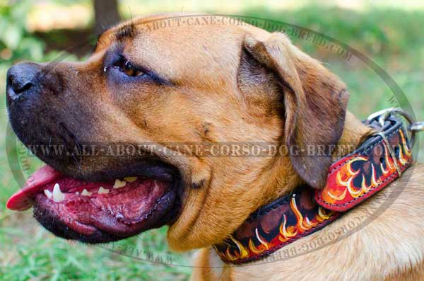 Cane Corso Leather Collar Hanpainted