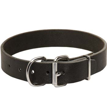 Cane Corso leather collar with silver like fittings