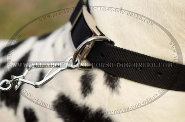 Handmade Nylon Dog Collar For Regular Use