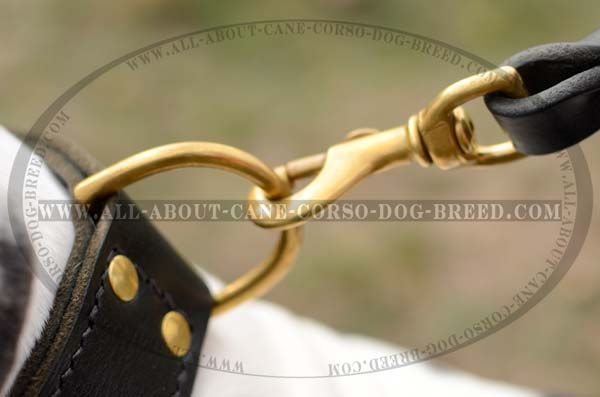 Strong Dog Leather Collar for Tall Dogs