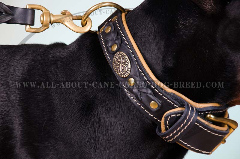 Leather Dog Collars Large Breed