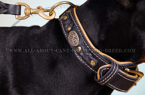 Large breed leather dog collar with splendid adornment