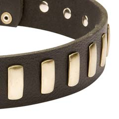 Decorated with plates leather collar