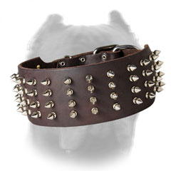 Leather dog collar for Cane Corso with columns of spikes