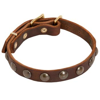 Designer studded leather dog collar for Cane Corso