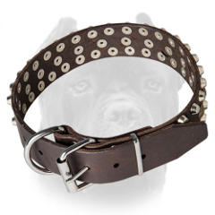 Leather Cane Corso collar with nickel plated fittings