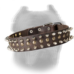 Walking leather dog collar for Cane Corso