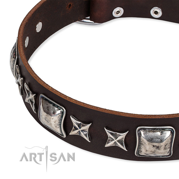 Full grain natural leather dog collar with embellishments for everyday use